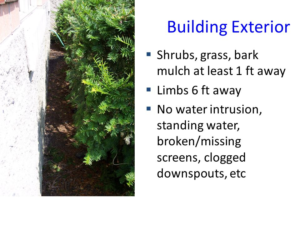Building Exterior Shrubs, grass, bark mulch at least 1 ft away Limbs 6 ft away No water intrusion, standing water, broken/missing screens, clogged downspouts, etc