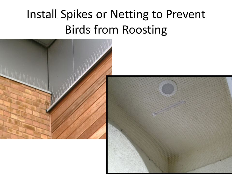 Install Spikes or Netting to Prevent Birds from Roosting