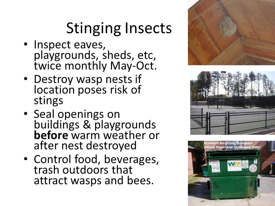 Stinging Insects Inspect eaves, playgrounds, sheds, etc, twice monthly May-Oct.