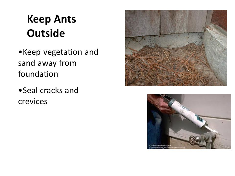 Keep Ants Outside Keep vegetation and sand away from foundation Seal cracks and crevices