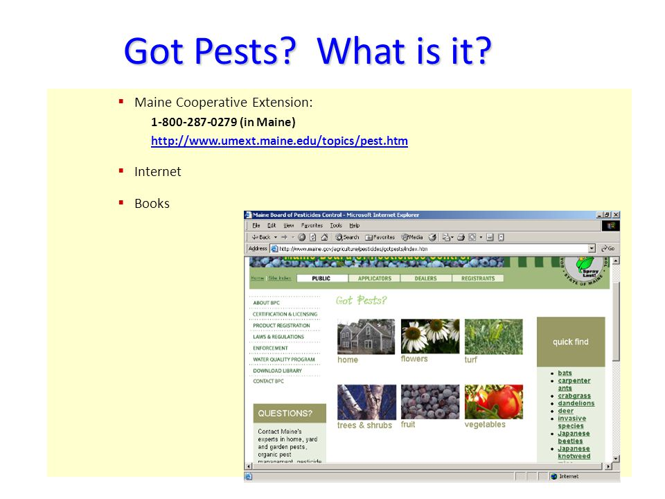 Got Pests? What is it? Maine Cooperative Extension: 1-800-287-0279 (in Maine) http://www.umext.maine.edu/topics/pest.htm Internet Books