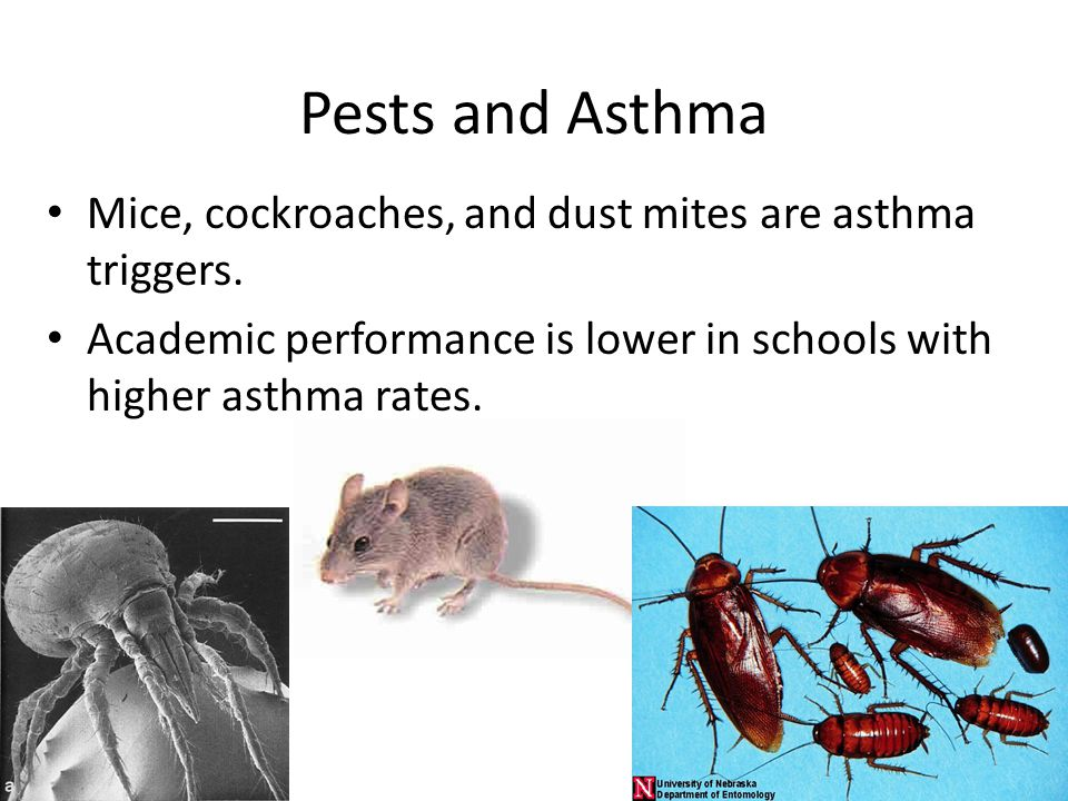 Pests and Asthma Mice, cockroaches, and dust mites are asthma triggers.