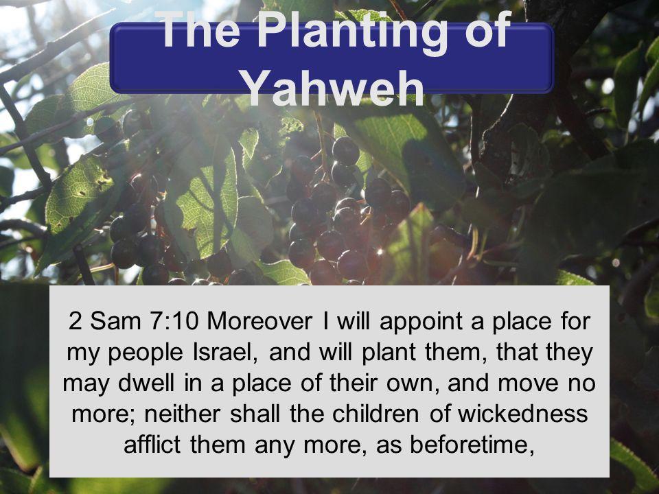 The planting of Yahweh Gen 2:8 Amos 9: 13-15 Matt 7:17-20 Isa 61:1-3