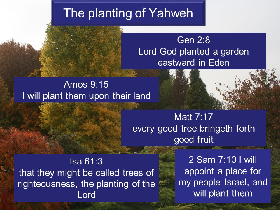 The planting of Yahweh Gen 2:8 Lord God planted a garden eastward in Eden Amos 9:15 I will plant them upon their land Matt 7:17 every good tree bringe