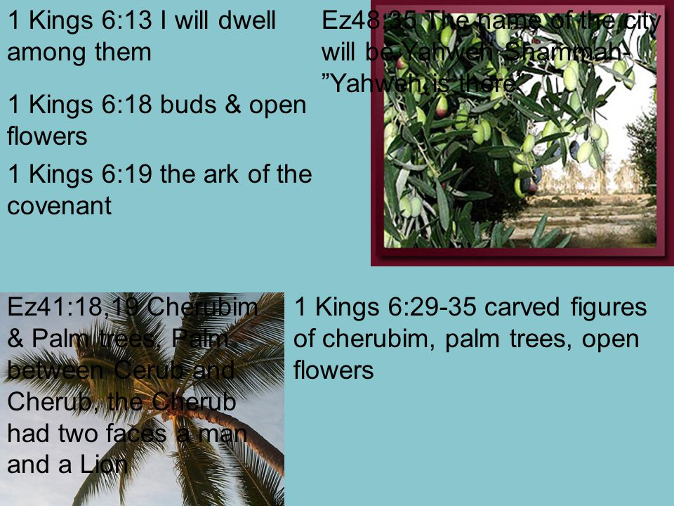 1 Kings 6:13 I will dwell among them 1 Kings 6:18 buds & open flowers 1 Kings 6:19 the ark of the covenant 1 Kings 6:29-35 carved figures of cherubim, palm trees, open flowers Ez48:35 The name of the city will be Yahweh Shammah- Yahweh is there Ez41:18,19 Cherubim & Palm trees, Palm between Cerub and Cherub, the Cherub had two faces a man and a Lion