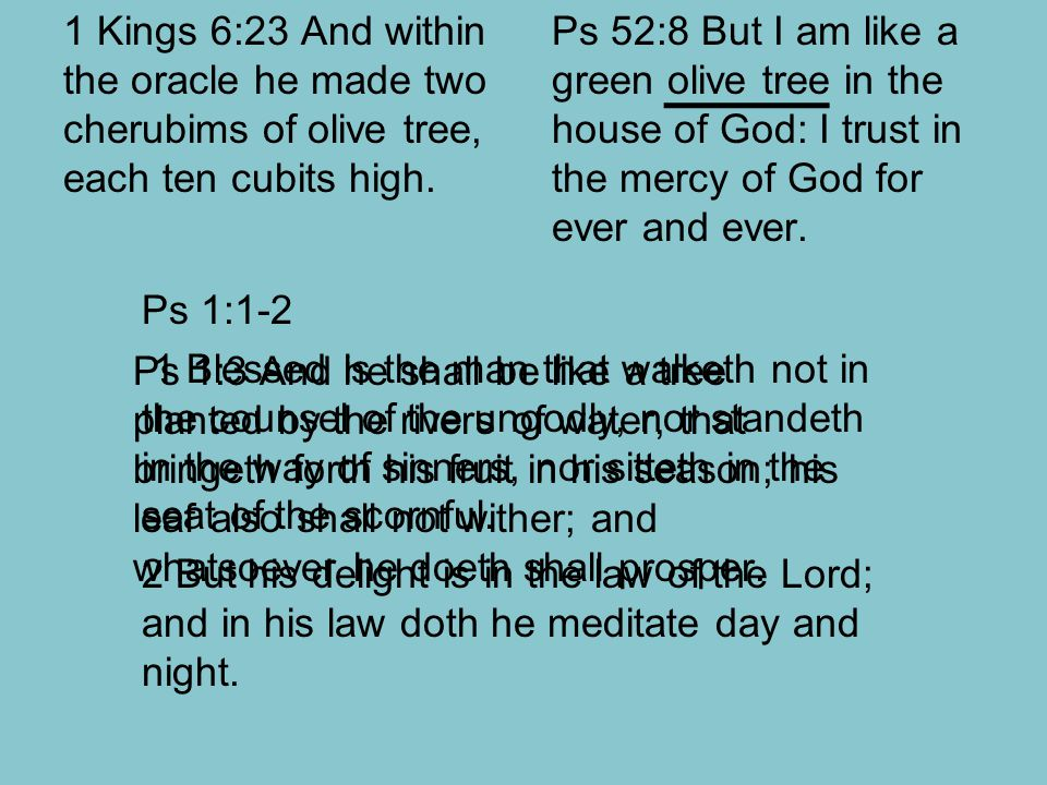 1 Kings 6:23 And within the oracle he made two cherubims of olive tree, each ten cubits high. Ps 52:8 But I am like a green olive tree in the house of