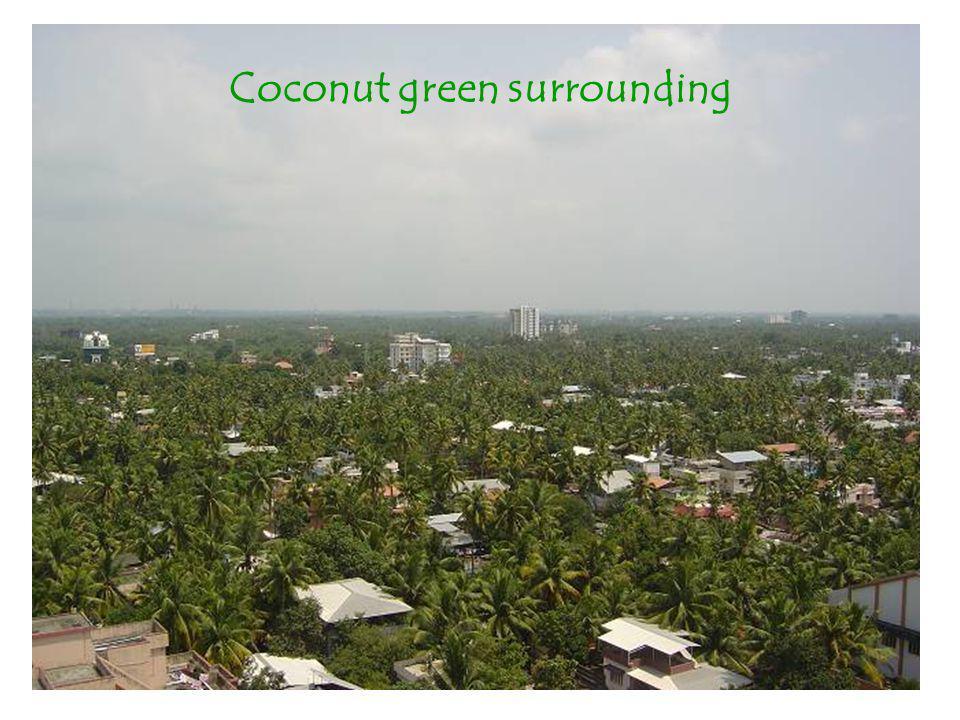 Coconut green surrounding