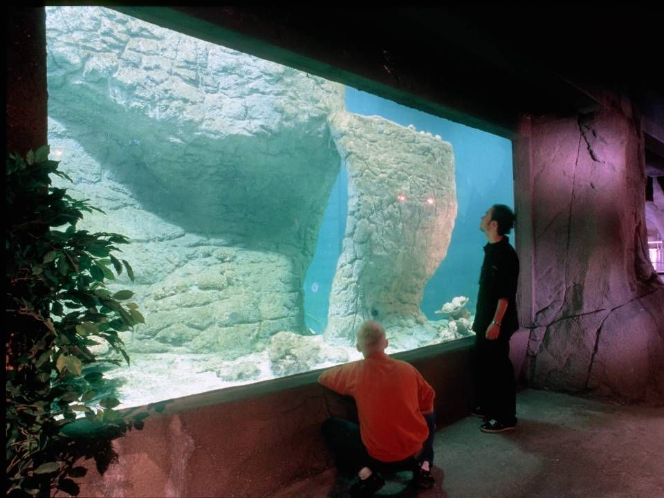 Special jobs Office aquariums Public aquariums Special aquariums for private people Architect made aquariums No job is impossible