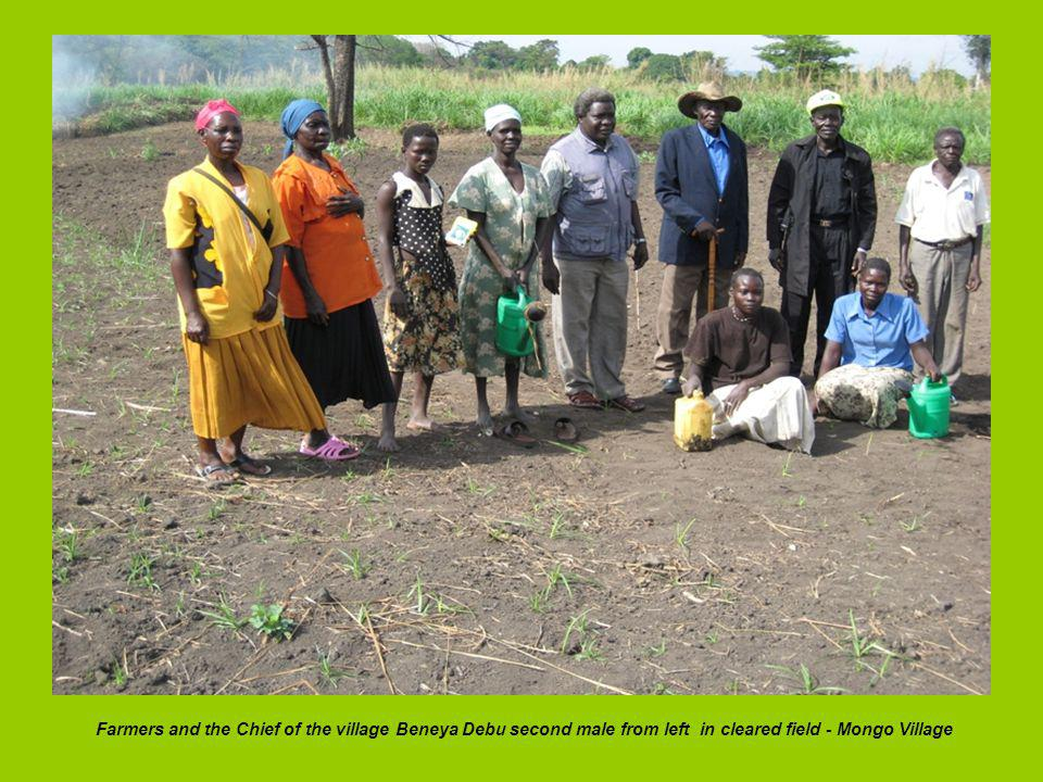 Farmers and the Chief of the village Beneya Debu second male from left in cleared field - Mongo Village
