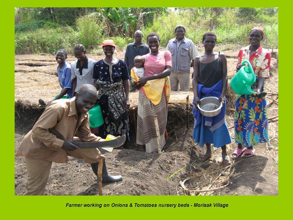 Farmer working on Onions & Tomatoes nursery beds - Morisak Village