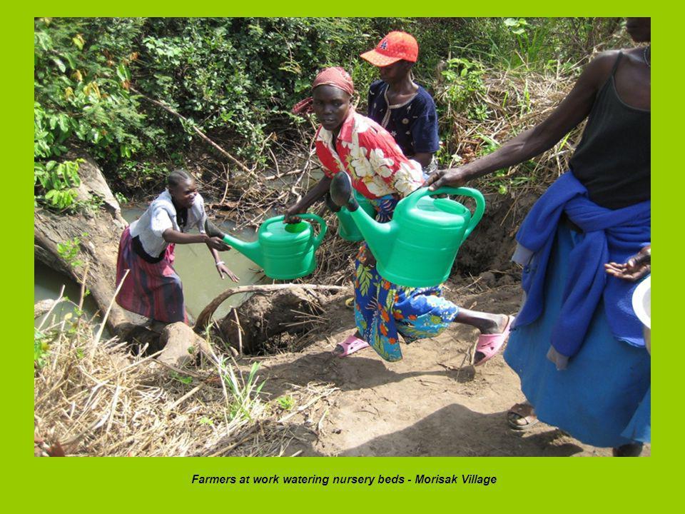Farmers at work watering nursery beds - Morisak Village