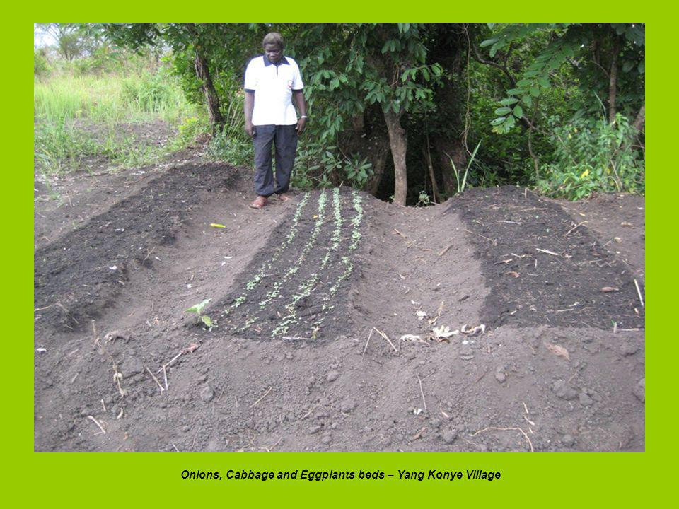 Onions, Cabbage and Eggplants beds – Yang Konye Village