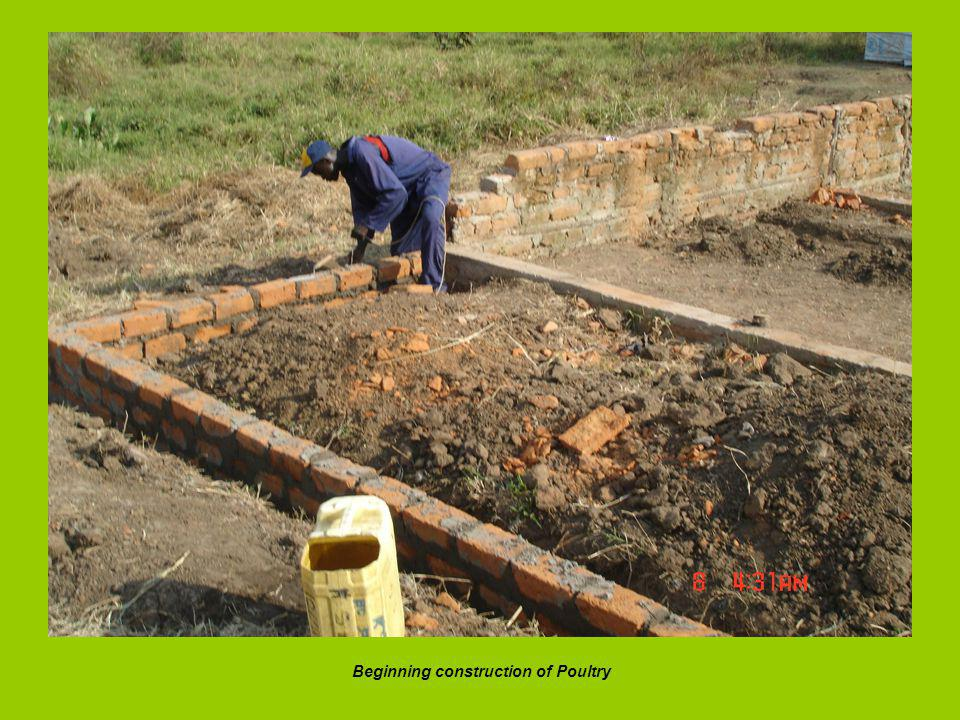 Beginning construction of Poultry
