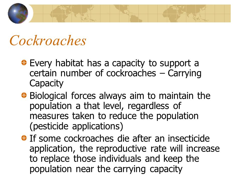 Cockroaches Every habitat has a capacity to support a certain number of cockroaches – Carrying Capacity Biological forces always aim to maintain the p