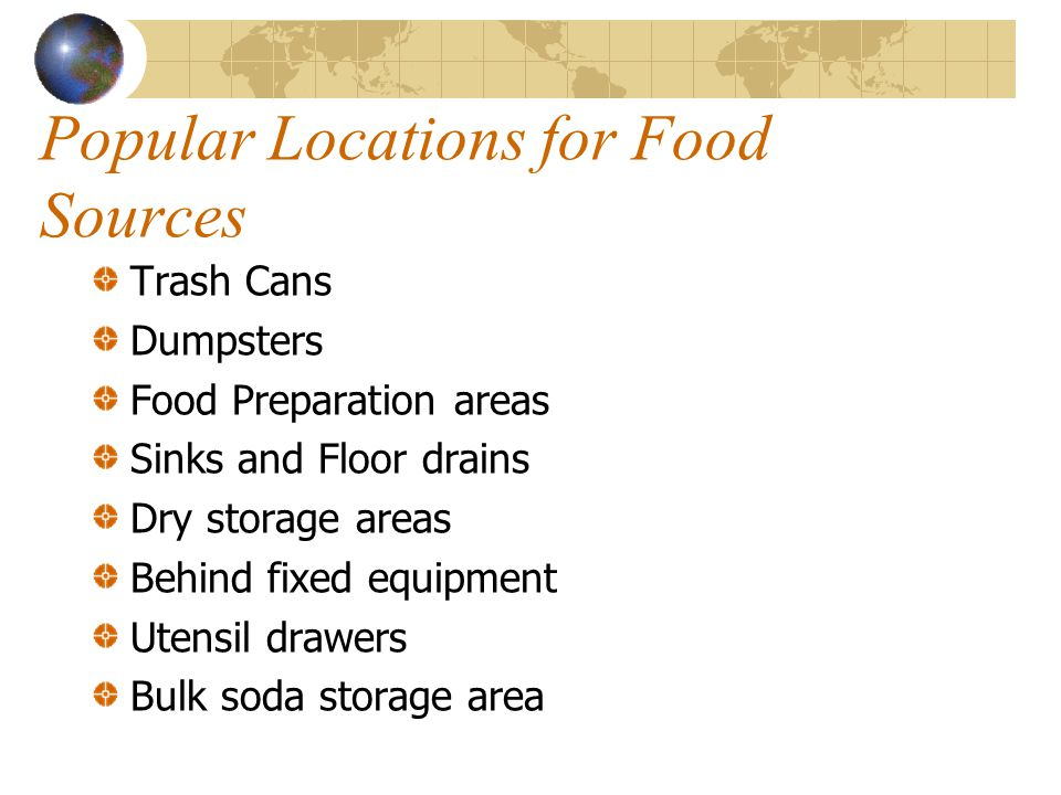 Popular Locations for Food Sources Trash Cans Dumpsters Food Preparation areas Sinks and Floor drains Dry storage areas Behind fixed equipment Utensil