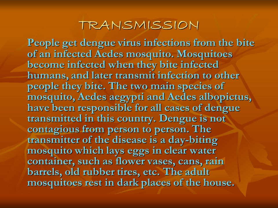 TRANSMISSION People get dengue virus infections from the bite of an infected Aedes mosquito.