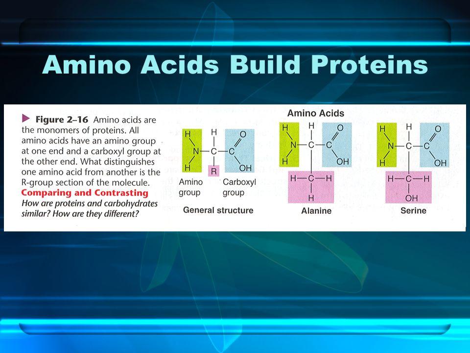Amino Acids Build Proteins
