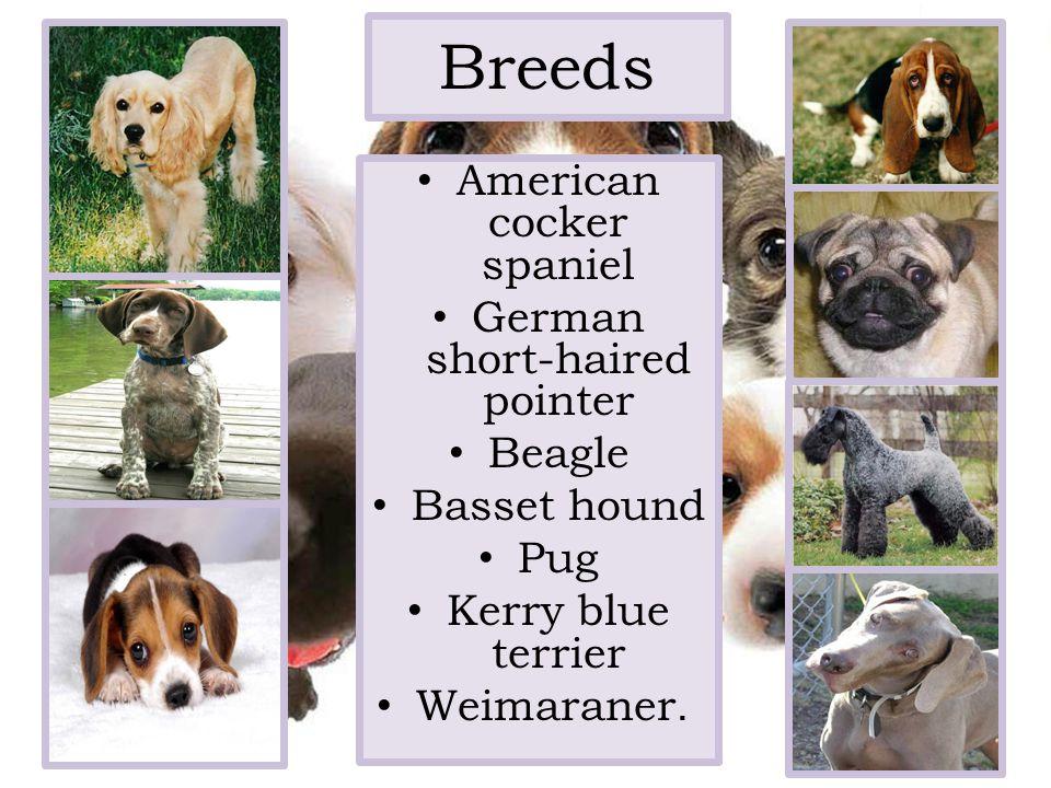 Breeds American cocker spaniel German short-haired pointer Beagle Basset hound Pug Kerry blue terrier Weimaraner.