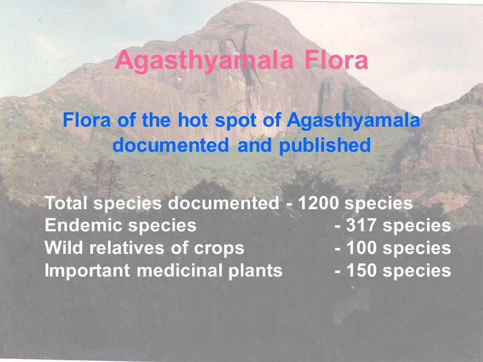 Western Ghats - Wild crop relatives Zingiber - 8 sp. Curcuma - 20 sp. Garcinia- 10 sp. Cinnamomum - 15 sp. Syzygium - 20 sp. Dioscorea - 15 sp. Amorph
