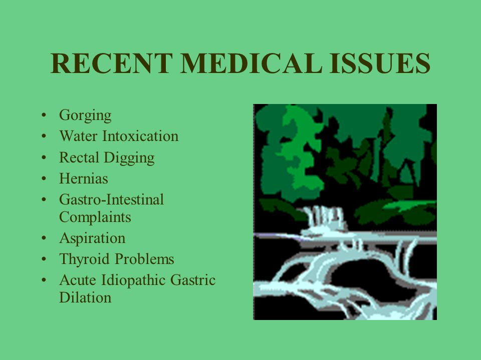 RECENT MEDICAL ISSUES Gorging Water Intoxication Rectal Digging Hernias Gastro-Intestinal Complaints Aspiration Thyroid Problems Acute Idiopathic Gast