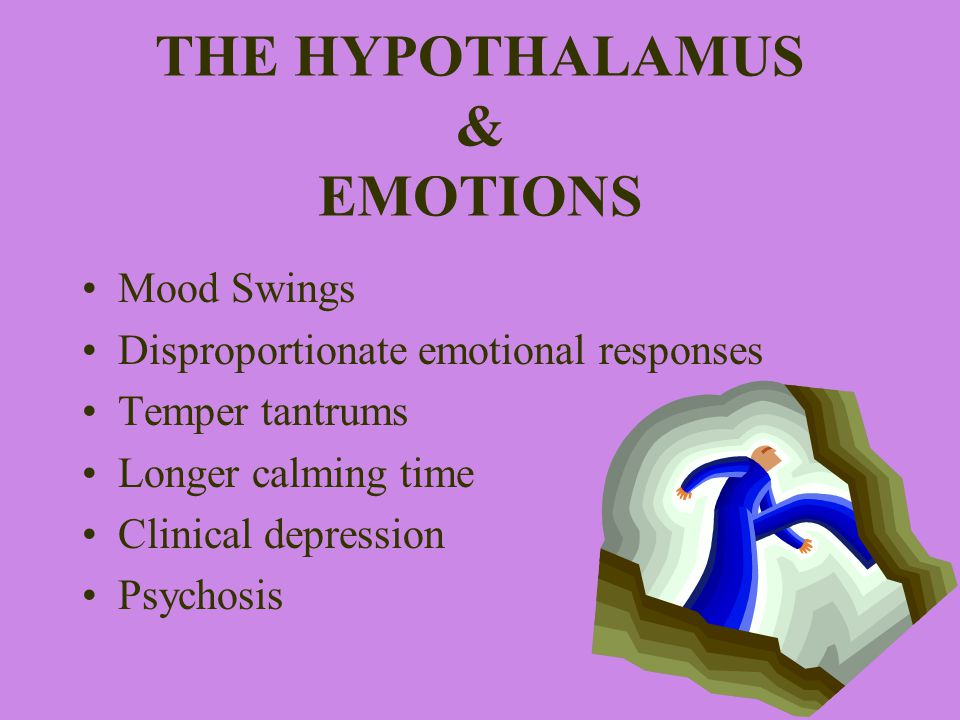 THE HYPOTHALAMUS & EMOTIONS Mood Swings Disproportionate emotional responses Temper tantrums Longer calming time Clinical depression Psychosis