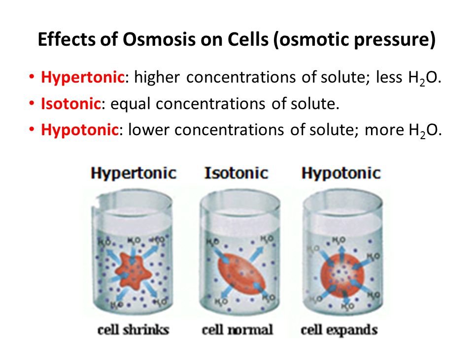 Osmosis movement of water across cell membrane. HIGH H 2 O LOW H 2 O