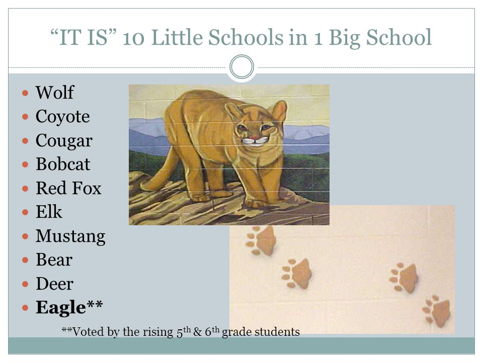 IT IS 10 Little Schools in 1 Big School Wolf Coyote Cougar Bobcat Red Fox Elk Mustang Bear Deer Eagle** **Voted by the rising 5 th & 6 th grade studen