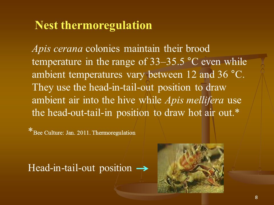 8 Nest thermoregulation Apis cerana colonies maintain their brood temperature in the range of 33–35.5 °C even while ambient temperatures vary between