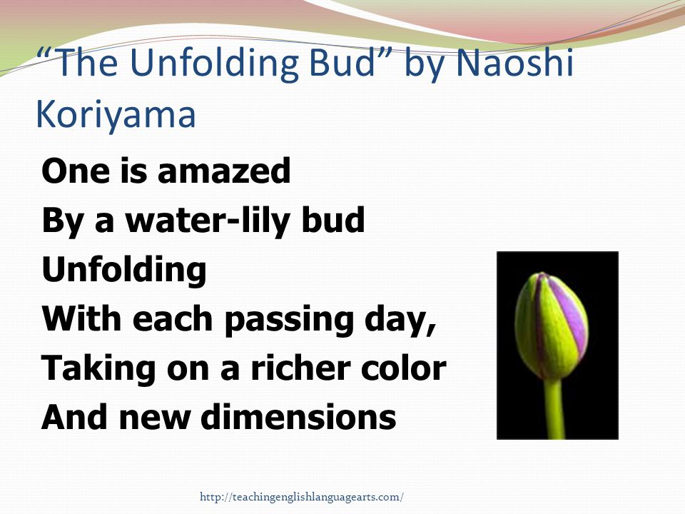 The Unfolding Bud by Naoshi Koriyama One is amazed By a water-lily bud Unfolding With each passing day, Taking on a richer color And new dimensions ht