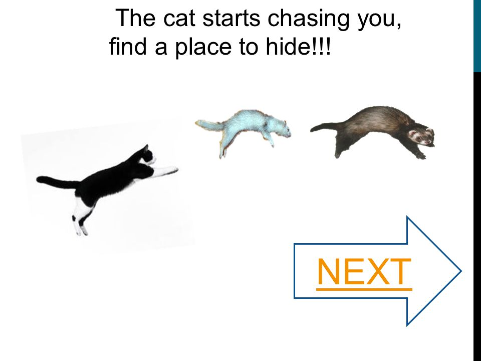 The cat starts chasing you, find a place to hide!!! NEXT