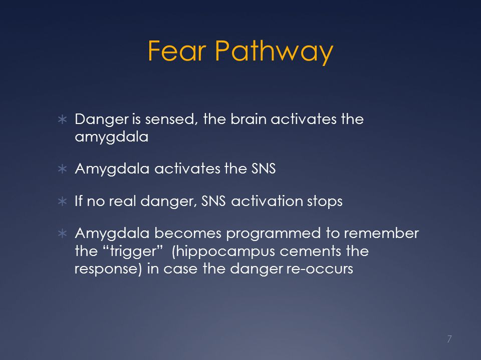 Fear Pathway Danger is sensed, the brain activates the amygdala Amygdala activates the SNS If no real danger, SNS activation stops Amygdala becomes programmed to remember the trigger (hippocampus cements the response) in case the danger re-occurs 7