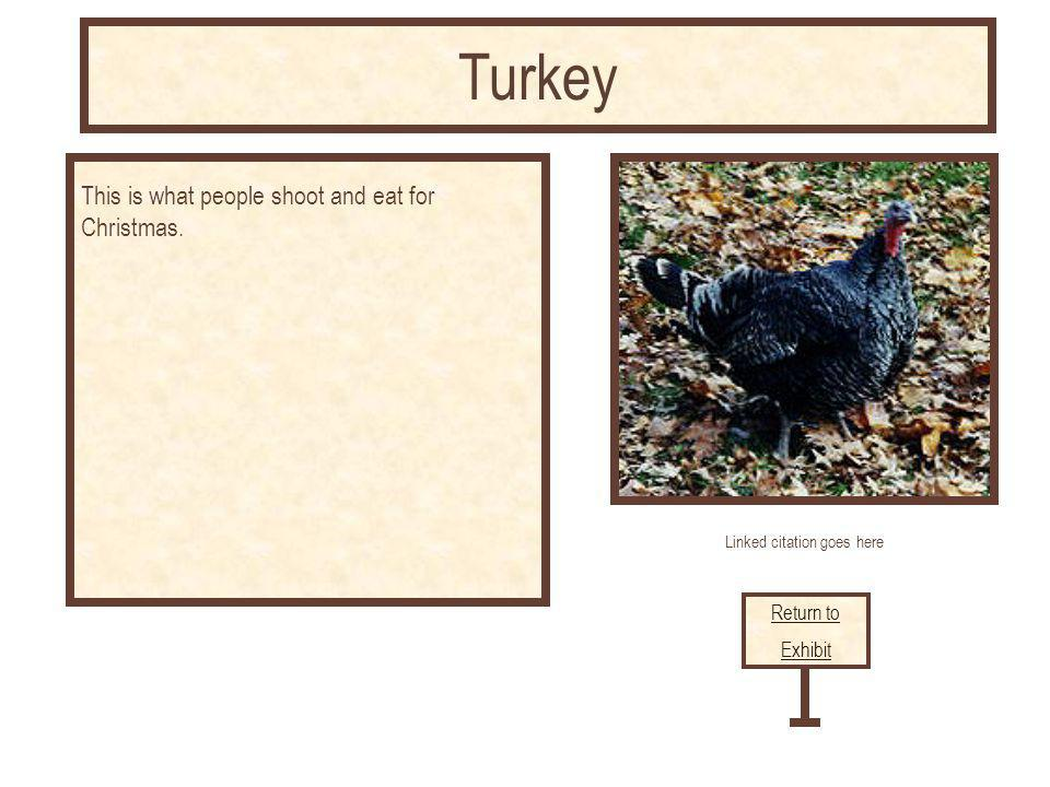 Linked citation goes here This is what people shoot and eat for Christmas. Return to Exhibit Turkey