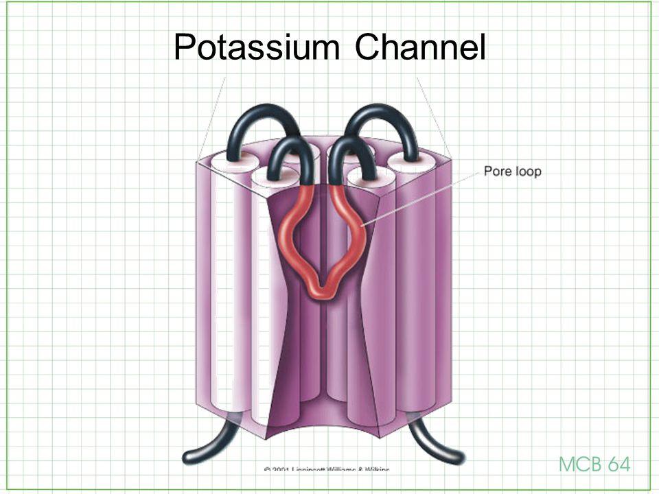 Potassium Channel Pore