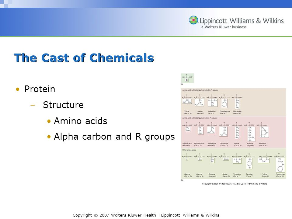 Copyright © 2007 Wolters Kluwer Health | Lippincott Williams & Wilkins The Cast of Chemicals Protein –Structure Amino acids Alpha carbon and R groups