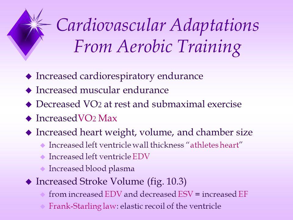 Cardiovascular Adaptations From Aerobic Training u Increased cardiorespiratory endurance u Increased muscular endurance u Decreased VO 2 at rest and s