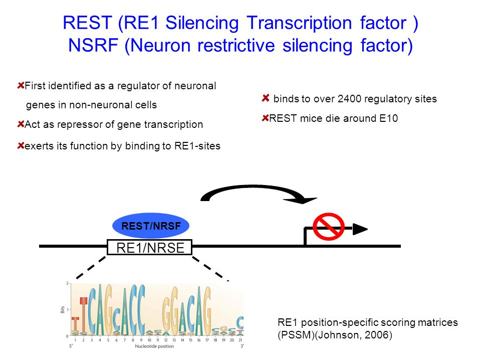 RE1/NRSE REST/NRSF First identified as a regulator of neuronal genes in non-neuronal cells Act as repressor of gene transcription exerts its function