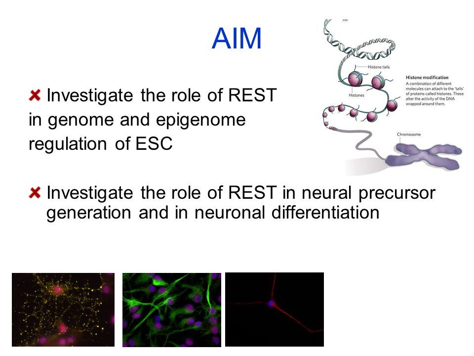 AIM Investigate the role of REST in genome and epigenome regulation of ESC Investigate the role of REST in neural precursor generation and in neuronal
