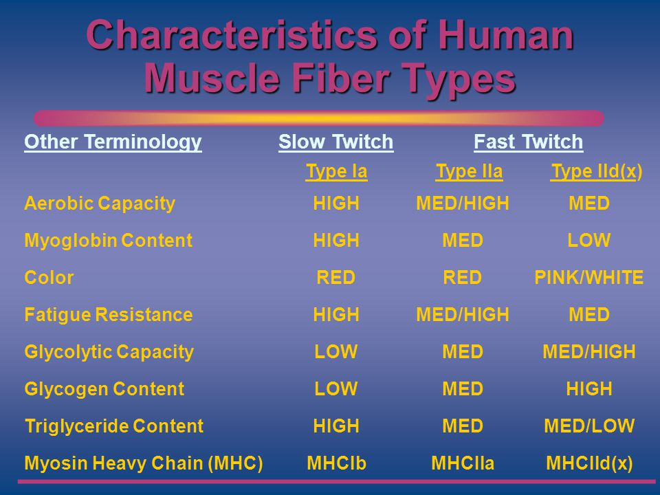 Characteristics of Human Muscle Fiber Types Other TerminologySlow TwitchFast Twitch Type IaType llaType lld(x) Aerobic CapacityHIGHMED/HIGHMED Myoglob
