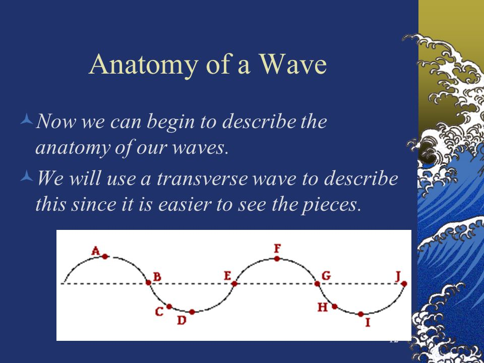 12 Anatomy of a Wave Now we can begin to describe the anatomy of our waves. We will use a transverse wave to describe this since it is easier to see t