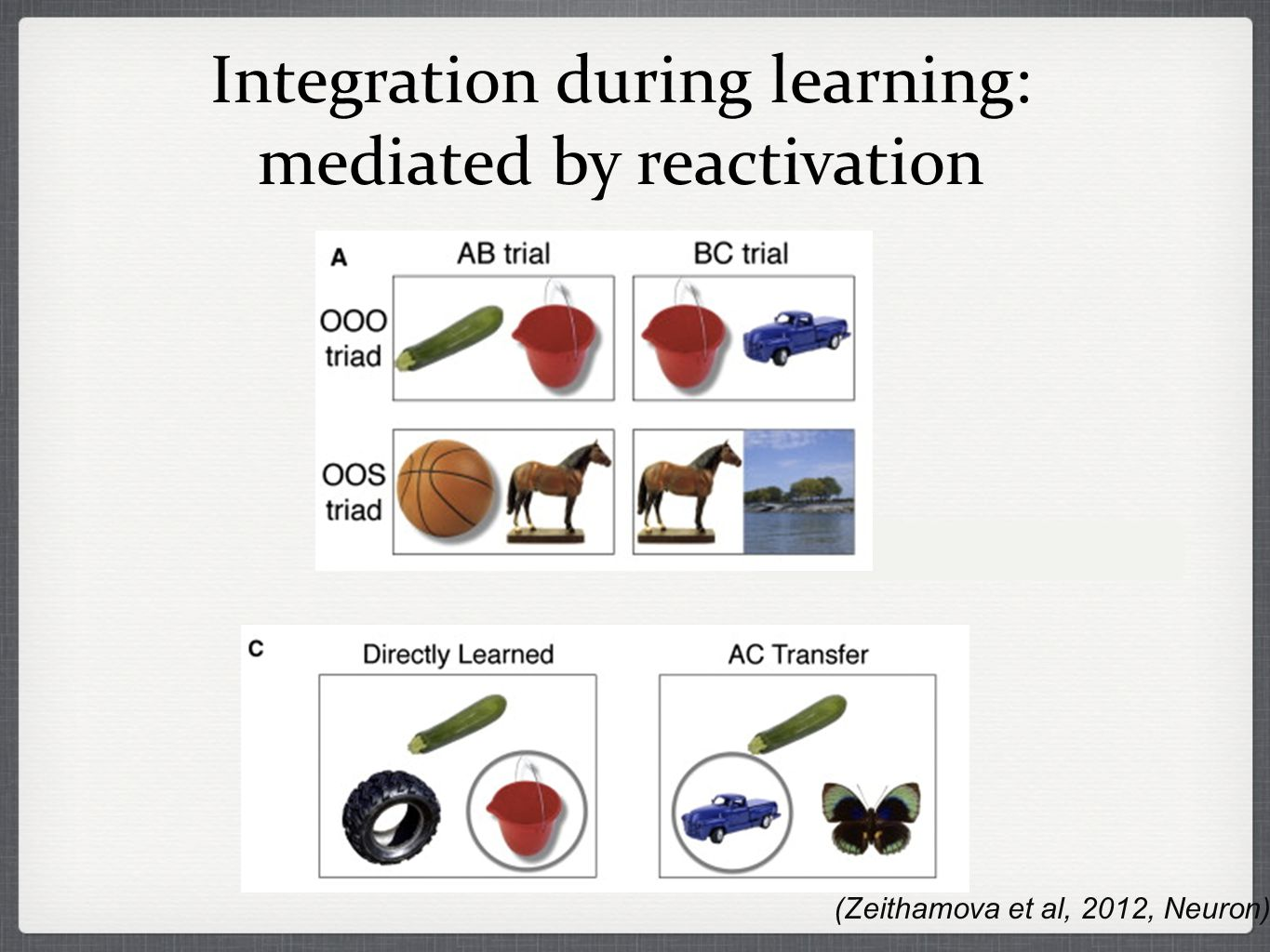 Integration during learning: mediated by reactivation (Zeithamova et al, 2012, Neuron)