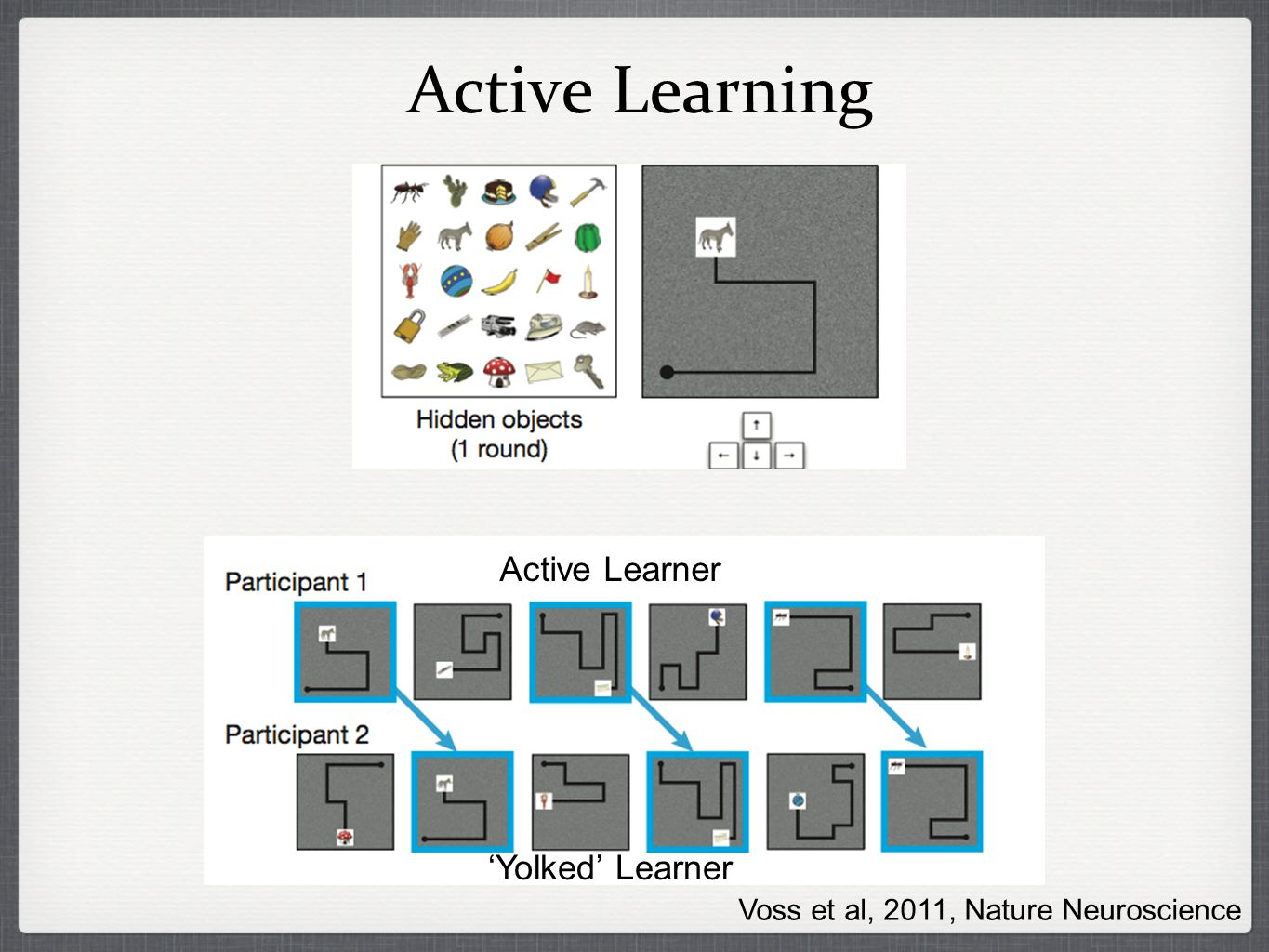 Active Learning Active Learner Yolked Learner Voss et al, 2011, Nature Neuroscience
