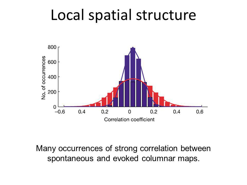 Local spatial structure Many occurrences of strong correlation between spontaneous and evoked columnar maps.