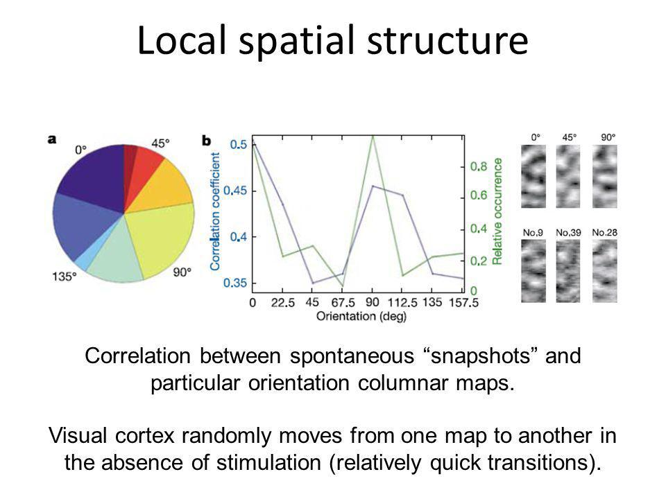 Local spatial structure Correlation between spontaneous snapshots and particular orientation columnar maps. Visual cortex randomly moves from one map