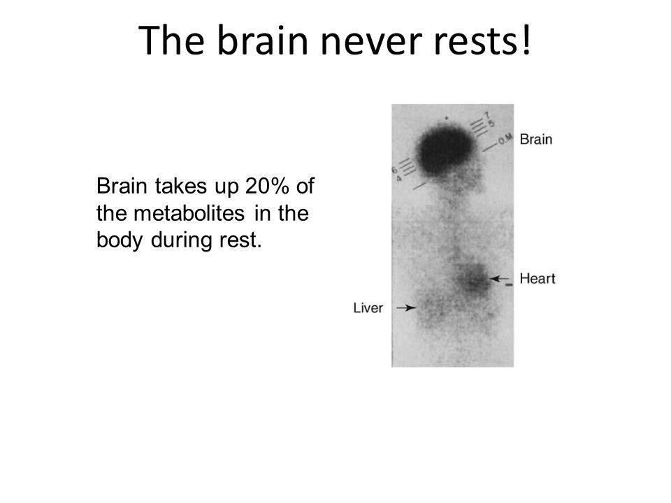 The brain never rests! Brain takes up 20% of the metabolites in the body during rest.