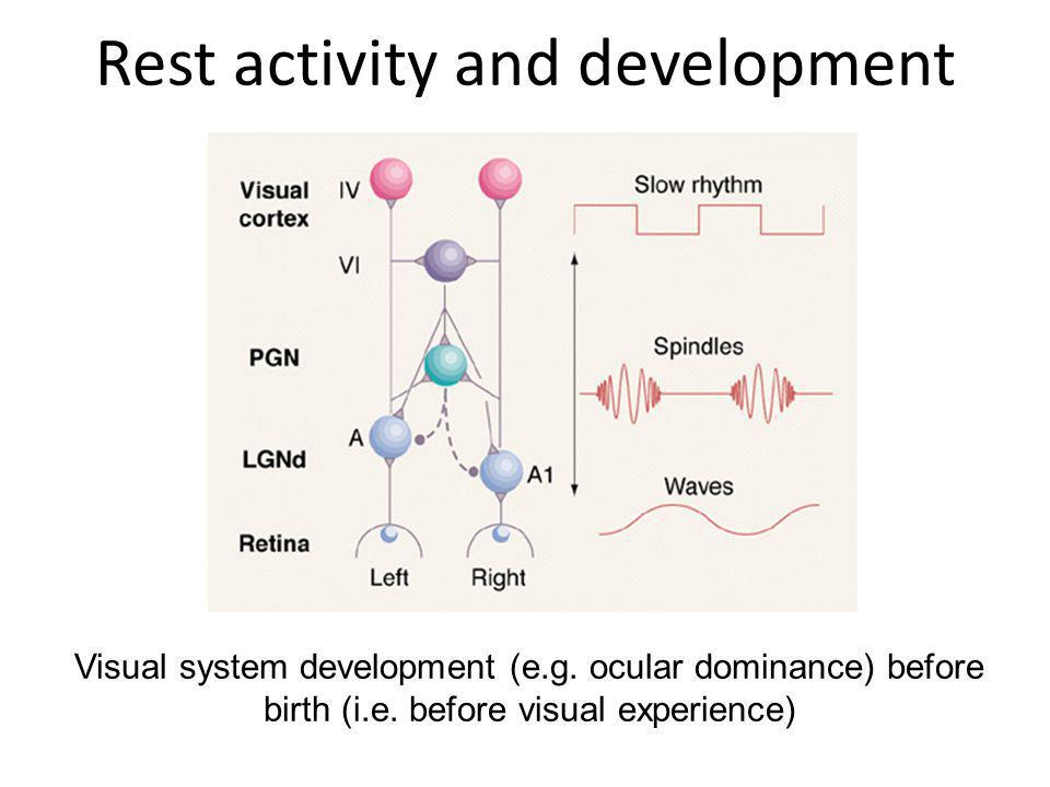 Rest activity and development Visual system development (e.g. ocular dominance) before birth (i.e. before visual experience)