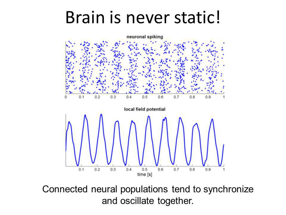 Brain is never static! Connected neural populations tend to synchronize and oscillate together.