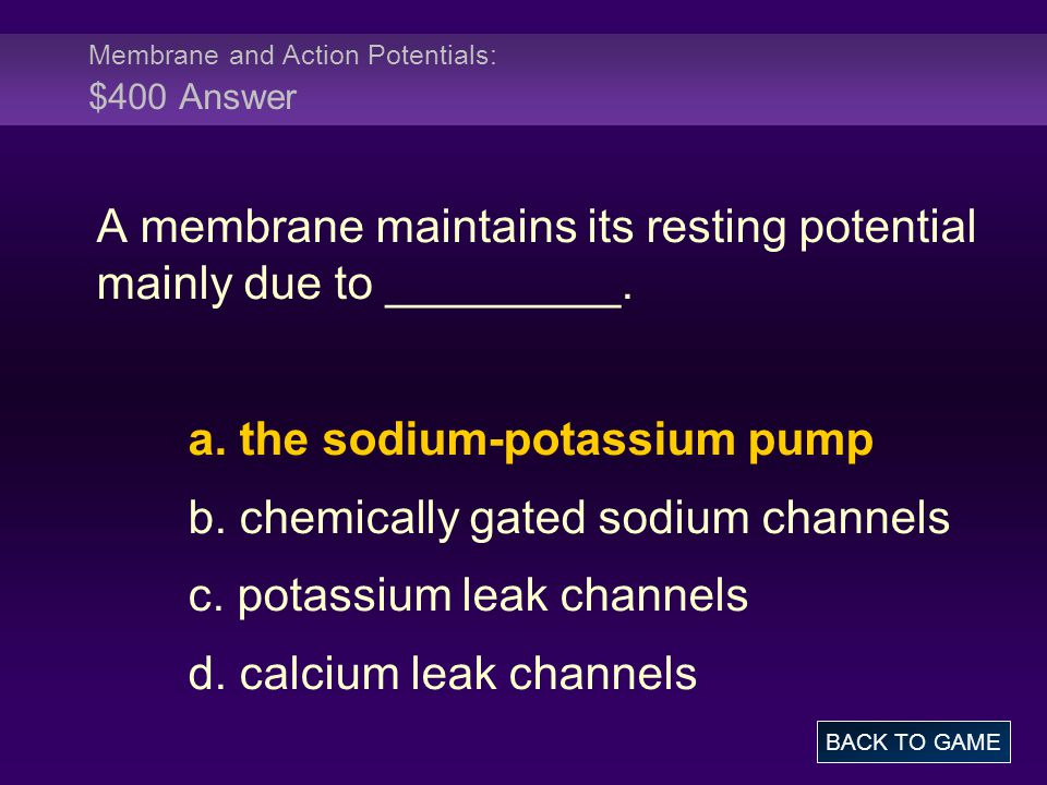 Membrane and Action Potentials: $400 Answer A membrane maintains its resting potential mainly due to _________. a. the sodium-potassium pump b. chemic