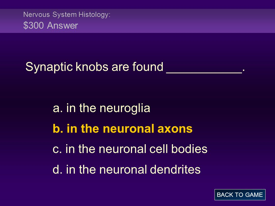 Nervous System Histology: $300 Answer Synaptic knobs are found ___________. a. in the neuroglia b. in the neuronal axons c. in the neuronal cell bodie