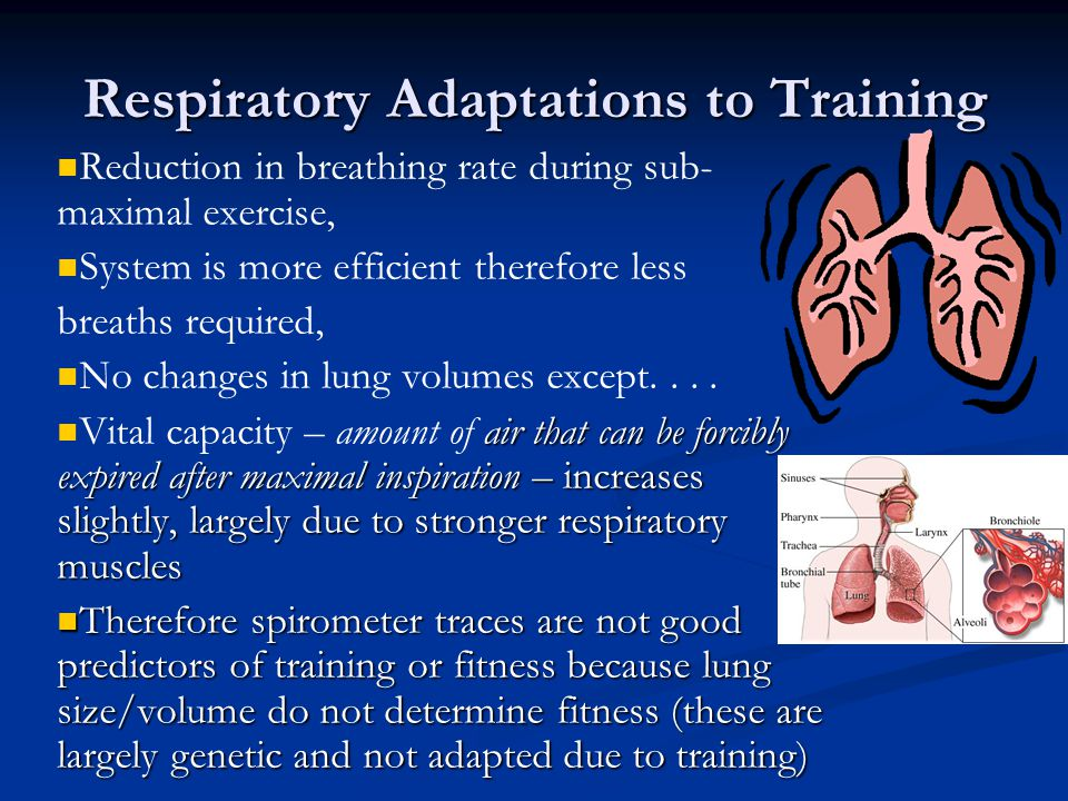 Respiratory Adaptations to Training Reduction in breathing rate during sub- maximal exercise, System is more efficient therefore less breaths required