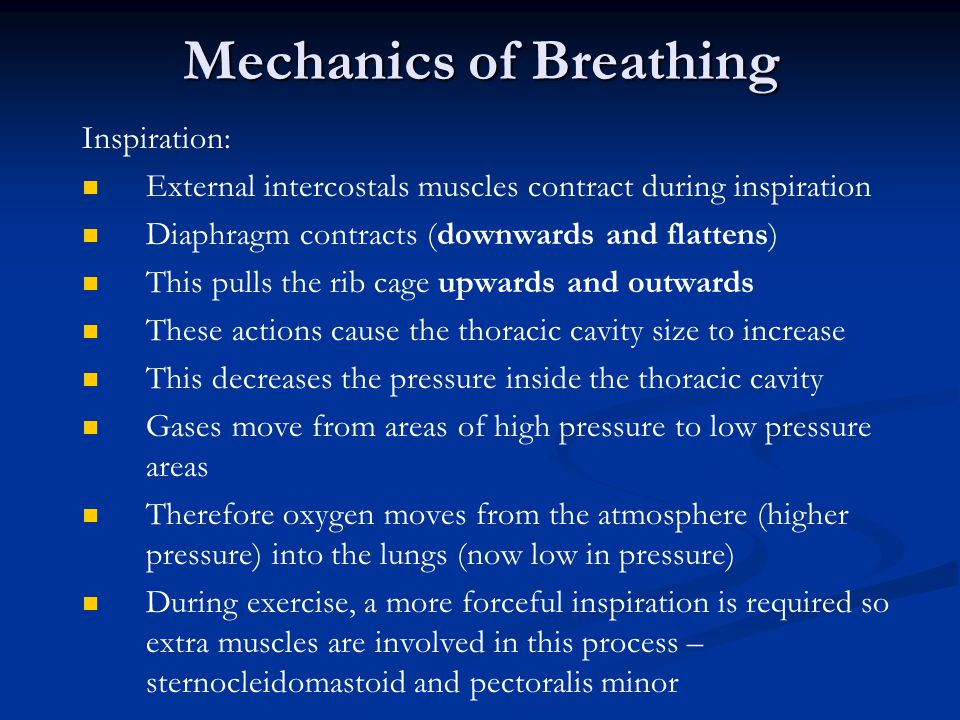 Mechanics of Breathing Inspiration: External intercostals muscles contract during inspiration Diaphragm contracts (downwards and flattens) This pulls